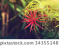 Tillandsia air plant in the nature. 34355148