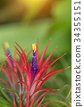 Tillandsia air plant in the nature. 34355151