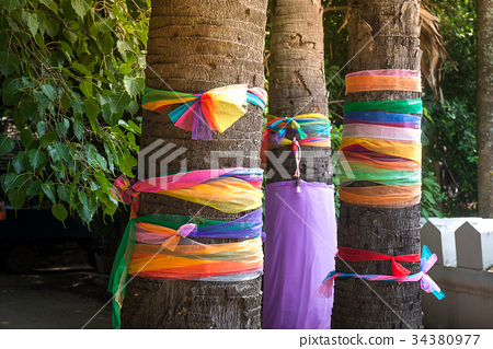 Individual believe Thai people about lunky tree 34380977