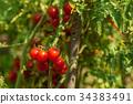 bush, small, fresh 34383491