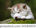 The sleeping puppy 34384650