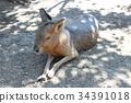 포유류, 육지의, 생물 34391018