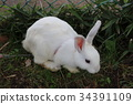 rabbit, mammal, animal 34391109