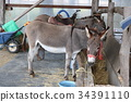 donkey, mammal, mammalian 34391110