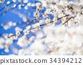梅花 花朵 花卉 34394212