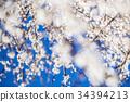 梅花 花朵 花卉 34394213