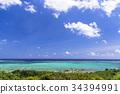 珊瑚 珊瑚礁 海 34394991
