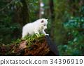 Husky puppy in a wild forest 34396919