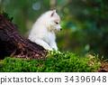 Husky puppy in a wild forest 34396948