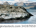 Colony of King Cormorants on a small island 34397650