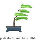 盆栽 樹木 樹 34398866