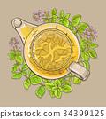 oregano tea in teapot 34399125