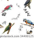 鳥兒 鳥 壁紙 34400125