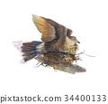 bird, flower, watercolor 34400133