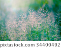 Background with summer flowers, flower field. 34400492
