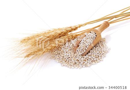 Barley Grains Isolated On White Background Stock Photo