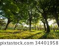 Prefectural Yasuyuki Bunan Nature Park 34401958