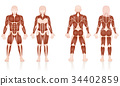 Male Female Muscles Anatomic Comparison 34402859