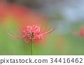 ฤดูใบไม้ร่วง,ดอกไม้,ดอกไม้ป่า 34416462
