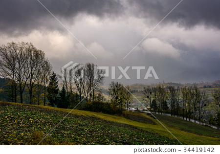 trees on hillside in rainy weather 34419142