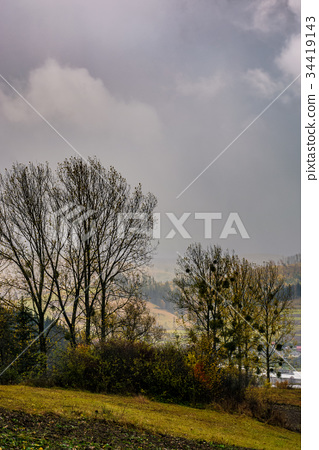 trees on hillside in rainy weather 34419143
