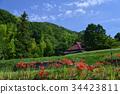 ดอกไม้ป่า,ฤดูใบไม้ร่วง,ทัศนียภาพ 34423811