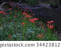 ดอกไม้ป่า,คากาว่า,ฤดูใบไม้ร่วง 34423812