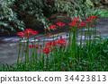 ดอกไม้ป่า,ฤดูใบไม้ร่วง,ดอกไม้ 34423813