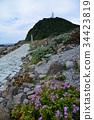 德岛 四国岛 红海龟 34423819