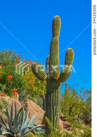 Desert cactus landscape in Arizona 34426906