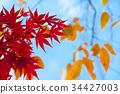 Multicolored beautiful autumn leaves 34427003