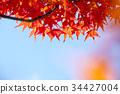 Multicolored beautiful autumn leaves 34427004