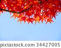 Multicolored beautiful autumn leaves 34427005