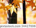 Multicolored beautiful autumn leaves 34427006