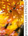 Multicolored beautiful autumn leaves 34427007