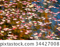 Autumn leaves floating on the surface of the water 34427008