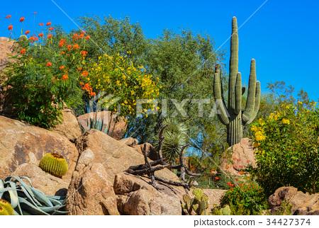 Desert cactus landscape in Arizona 34427374