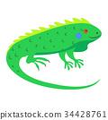 iguana, sticker, vector 34428761