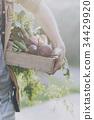 花园 园丁 丰收 34429920