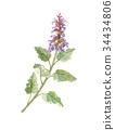 花朵 花 花卉 34434806