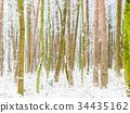 斯诺伊森林,冬天风景。 34435162