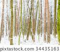 斯诺伊森林,冬天风景。 34435163