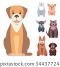 Cute Purebred Dogs Cartoon Flat Vectors Icons Set 34437724