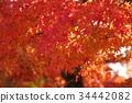 京都 古城 古都 34442082