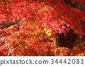 京都 古城 古都 34442083