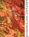 京都 古城 古都 34442084