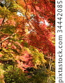京都 古城 古都 34442085