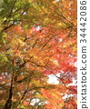 京都 古城 古都 34442086