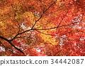 京都 古城 古都 34442087