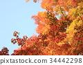 秋天 秋 秋天的印象 34442298